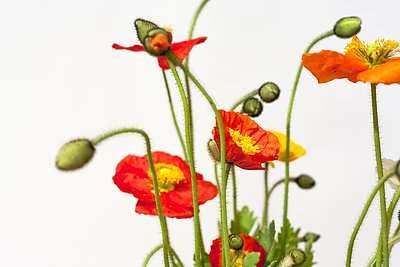Mohnblume Blumenladen Und Fachgeschaft Fur Floristik In Munchen Blumenladen